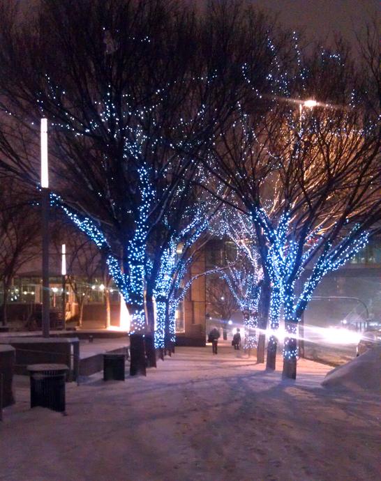 שדרת העצים לצד העירייה, עם אורות חורף
