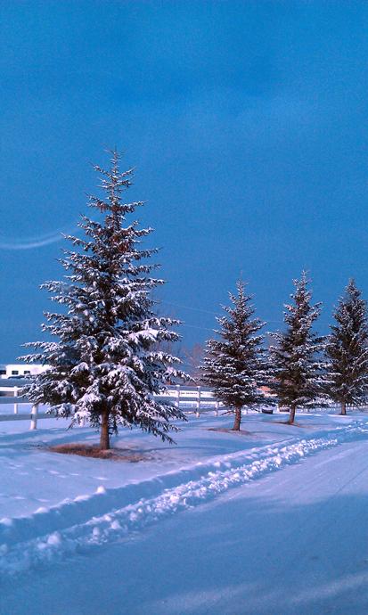 כביש הגישה לחווה, זוהר בשמש אחר צהריים, אחרי לילה סוער של שלג