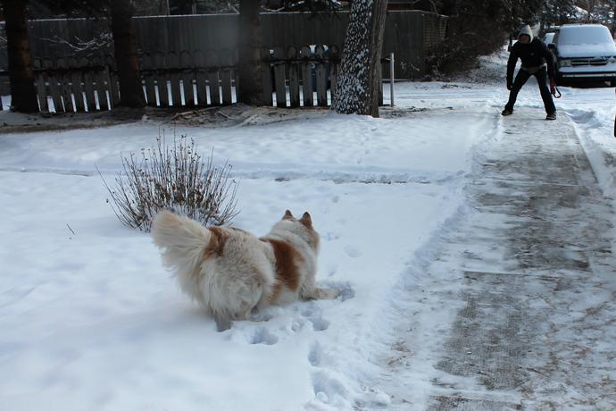 נובה ועופר משתובבים בשלג