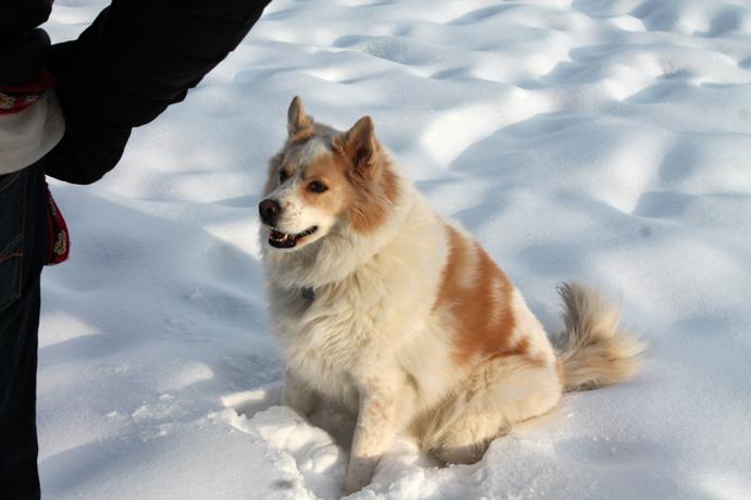היא נורא מבסוטית מהשלג, הכלבה הזו. כשהוא ככה, טרי ורך, היא ממהרת להתפלש בו ברגע שמשחררים אותה.