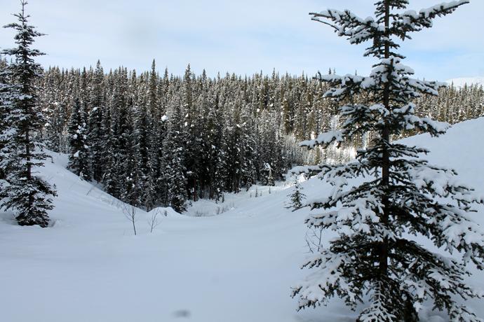 """ככה לפתוח את התיאבון - תמונות מטיול סנושוז שעשינו בלייק לואיז. ההרים בסופ""""ש נעים ושמשי (הטמפ' היתה מעל לאפס חלק מהיום) עם שלג טרי, יפה ונקי."""