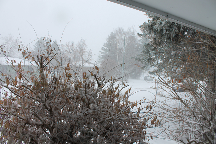 סופת שלג ברחוב שלנו - מבט מהדלת החוצה. הצד השני של הרחוב מטושטש.