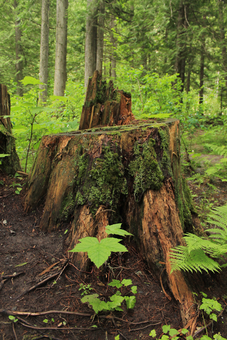 באחת העצירות לצד הדרך, היער מפגין את יופיו גם קרוב לכביש