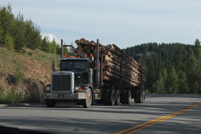 משאית עצים אופיינית בדרך (עכשיו כולם לזמזם I'm a lumberjack)