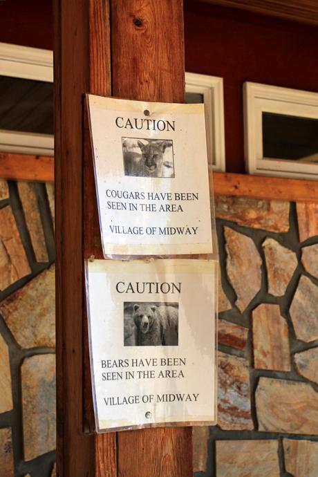 אזהרות דובים וקוגרים בעיירה מידטאון שבדרך