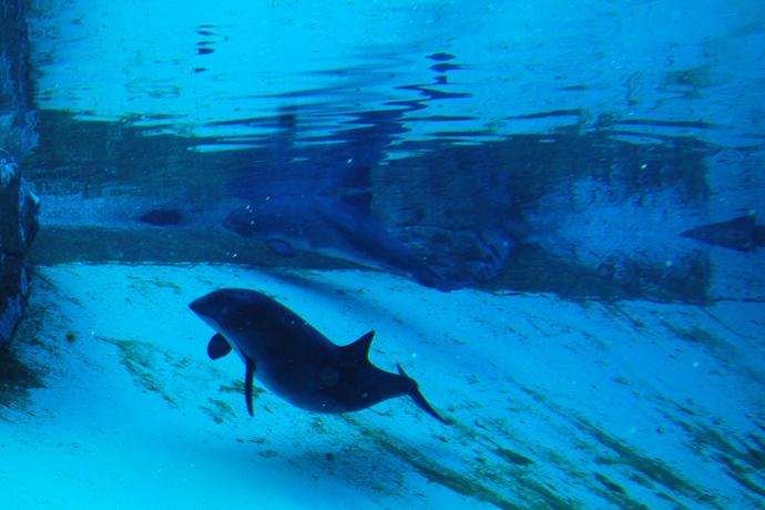 דולפין באקווריום של וונקובר