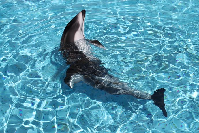 עוד דולפין, מסוג אחר