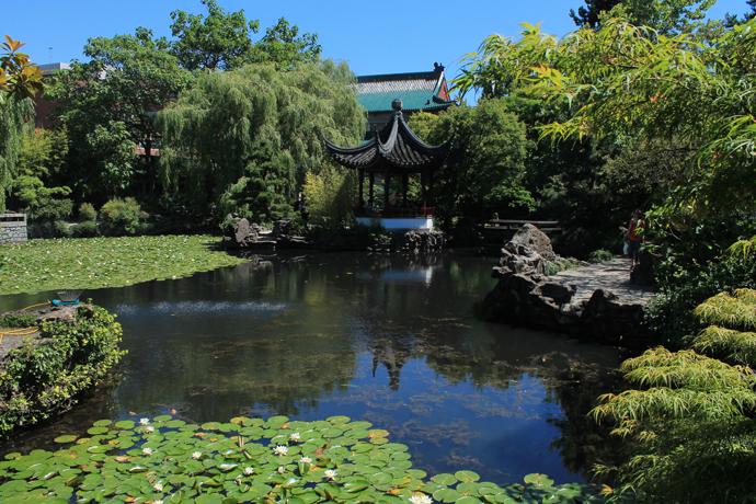 בגן הסיני