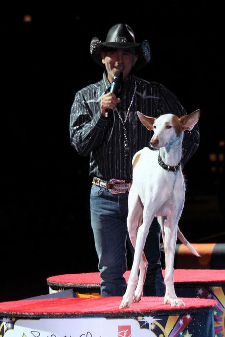 קריין וכלב דומים באופן מפתיעקרדיט תמונה: דניאלה הראל