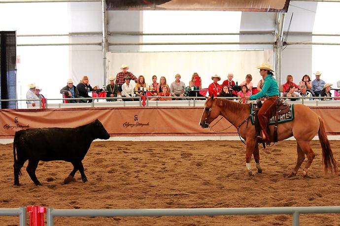 הסוס והעגלה מישירים מבט. בשלב זה הבוקרת מניחה לסוס לעבוד ואינה מנחה אותו. הסוס יודע מה הוא צריך לעשות - לדמות את תנועות העגלה כמו במראה. מרשים.