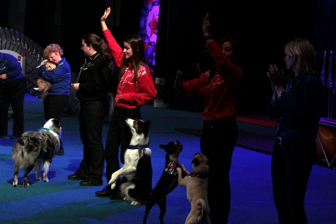 הכלבים והנוהגים מנופפים לקהל