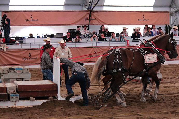 ריקוד של ציפיה מצד הסוסים בעוד הנוהג מנסה לרסנם שלא יתפרצו בטרם המגררת רתומה כהלכה
