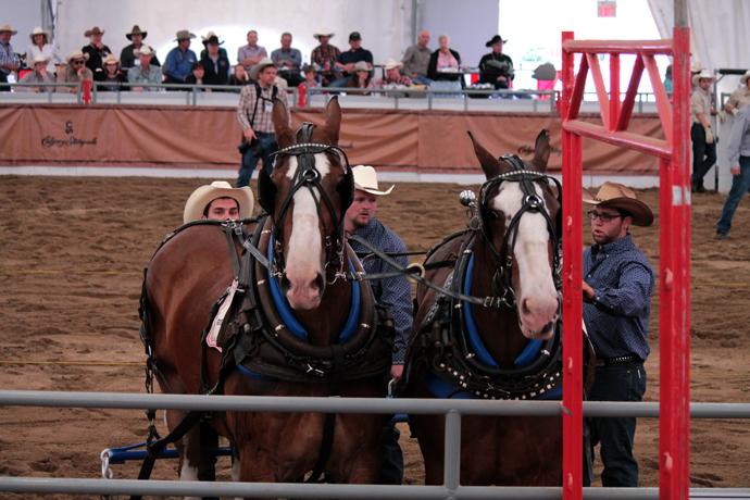 זוג סוסים מבוהלים שהובלו על ידי הנהג שלהם הצידה להרגע. הוא החליט לא לשוב לתחרות - הסוסים שלו היו לחוצים והוא קרוב לוודאי לא רצה להסתכן בתאונה.