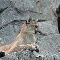 הביקור של דניאלה – פוסט שביעי, גן החיות