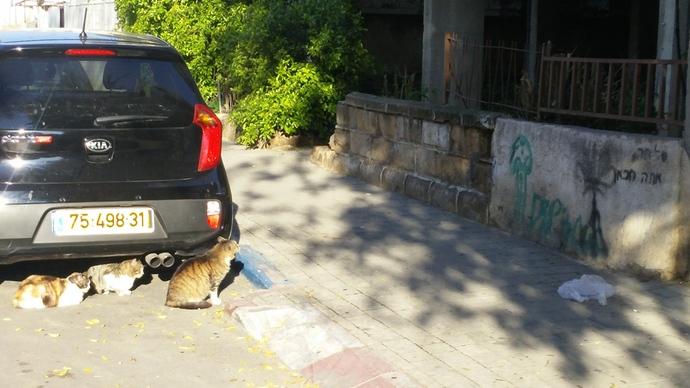 חתולים! אצלנו אין כל כך... רוב אוכלוסיית הרחוב מורכבת מסנאים וארנבות (התגובה של הכלבים לא רגועה יותר משום כך)